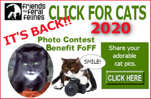 Friends of Feral Felines